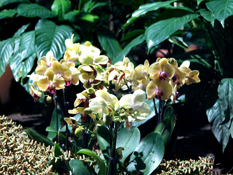 Орхидеи на выставке Осколки радуги в Санкт-Петербурге