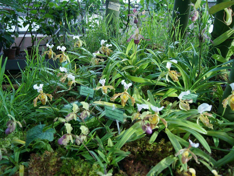 Орхидеи в Ботаническом саду СПБ