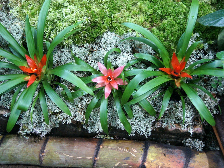 Бромелии на выставке орхидей осколки радуги в Петербурге