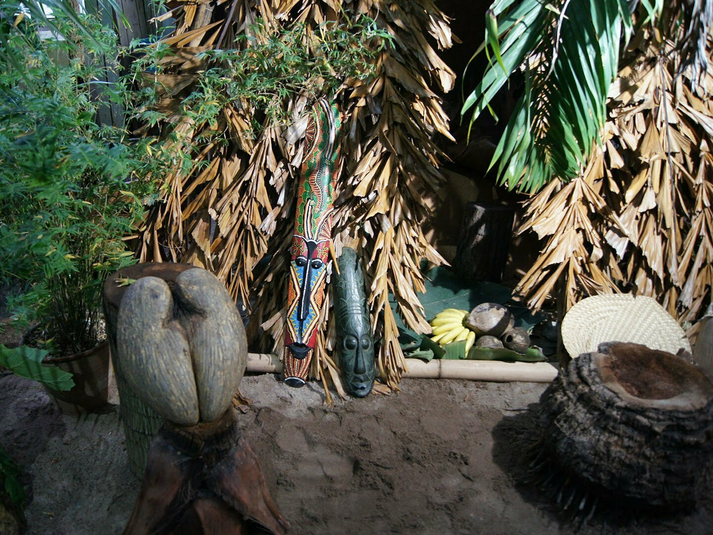 Сейшельский орех в Ботаническом саду имени Петра Великого