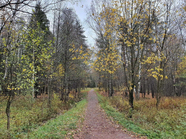 Аллея в Шуваловском парке, осень