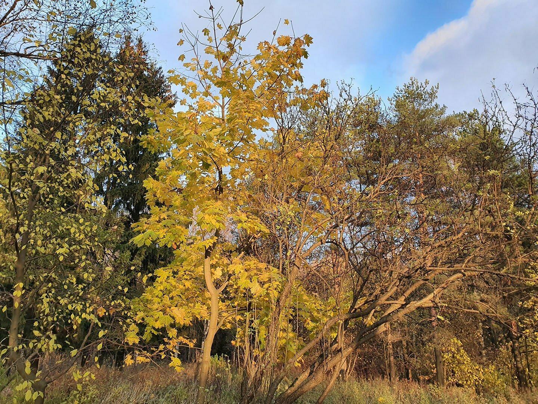 Краски осени в Шуваловском парке