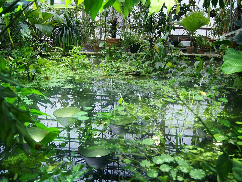 Водоем в Пальмовой оранжерее