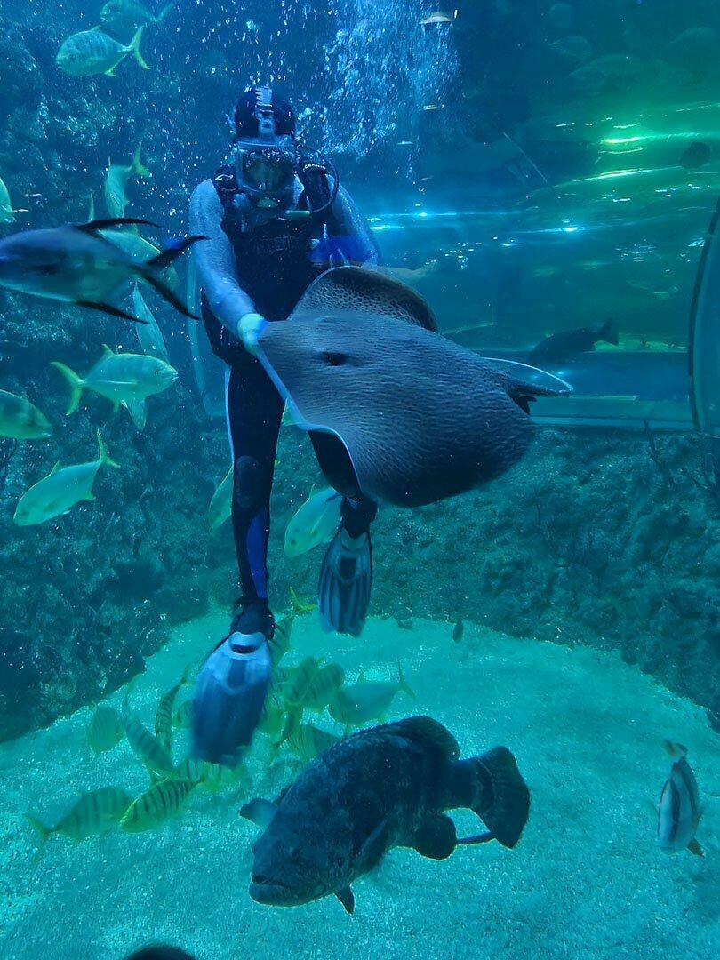 Аквалан7гист кормит рыб в московском океанариуме