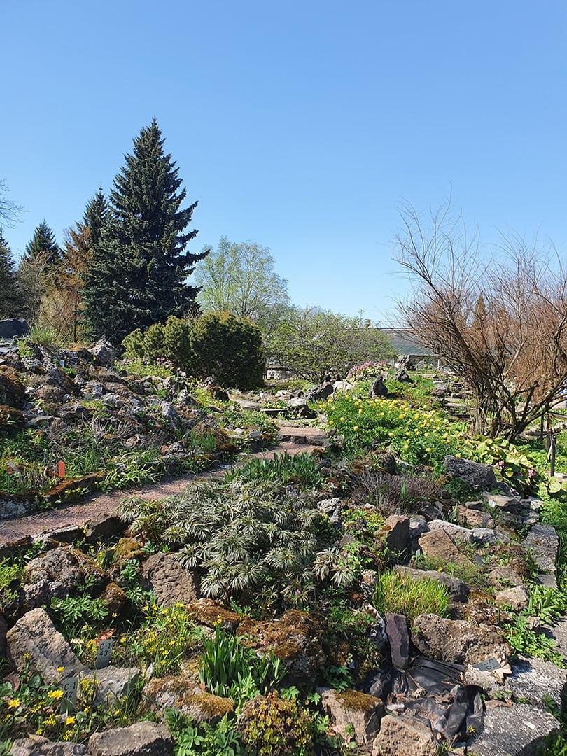 Альпийские горки в ботаническом саду СПБ