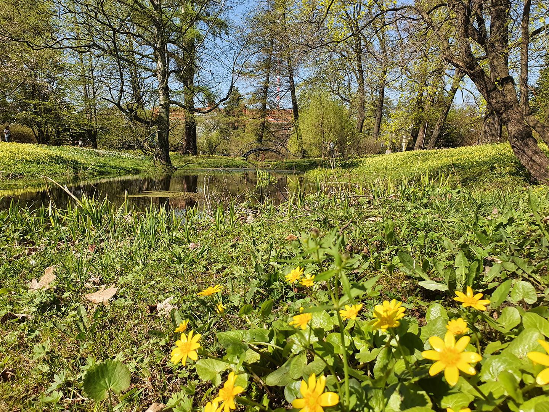 Весенние цветы в ботаническом саде