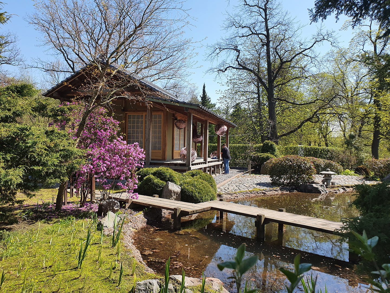 Японский сад в Ботаничесом саду Спб
