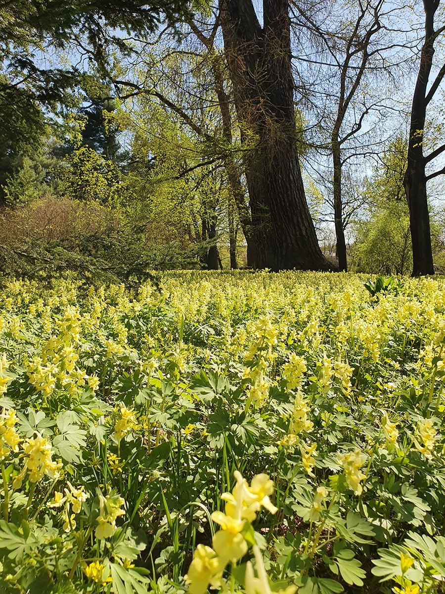 Цветущая весенняя полянка в ботаническом саду